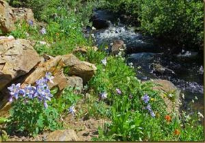 Grape Creek RV, Wet Mountain Valley, Sangre de Cristo Range, Westcliffe, CO: Wildlife, Hunting, Hiking, Fishing, Ranching